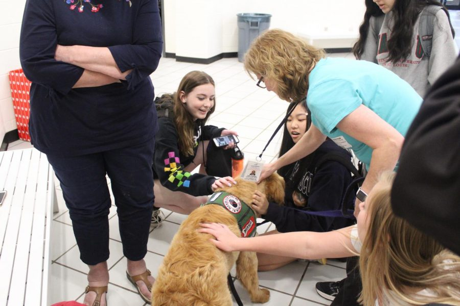 Bunny sits patiently. She calmly wags her tail at the sight of four teenagers smiling at at her. Bunny was one of the older dogs there on Wednesday but she was still able to greet everyone with a lot of energy and kisses. Her foster mom, Cathy Campfield says,