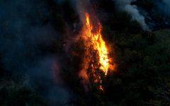 Amazon Rainforest In Jeopardy