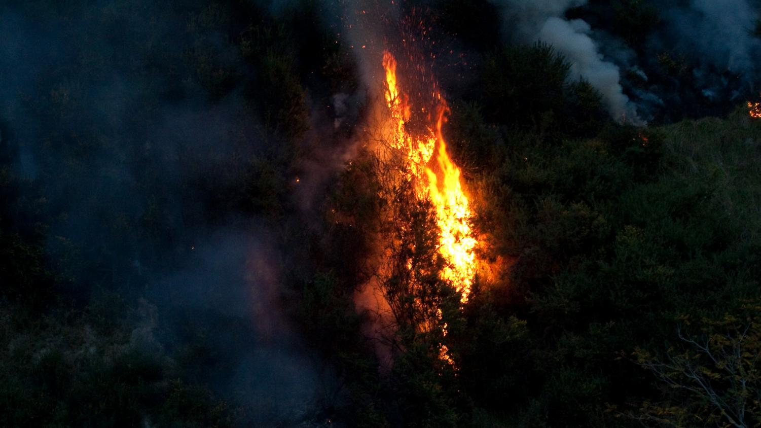 The Amazon Rainforest has been burning down since August, causing serious deforestation. Government officials have been hard at work, attempting to find an effective solution to bringing an end to these fires.
